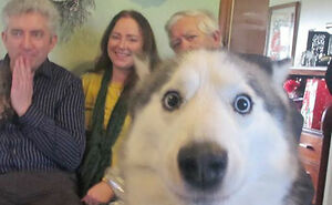 Hey Pandas, Show Me The Funniest Photobomb Your Pet Has Caused