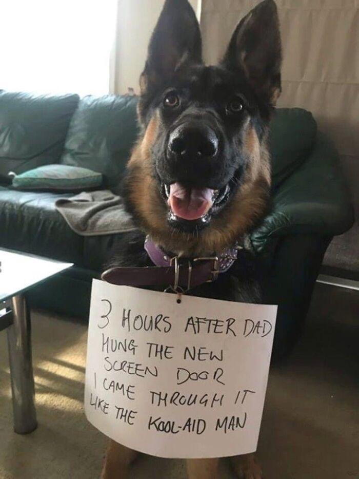 The Determined Doggo!