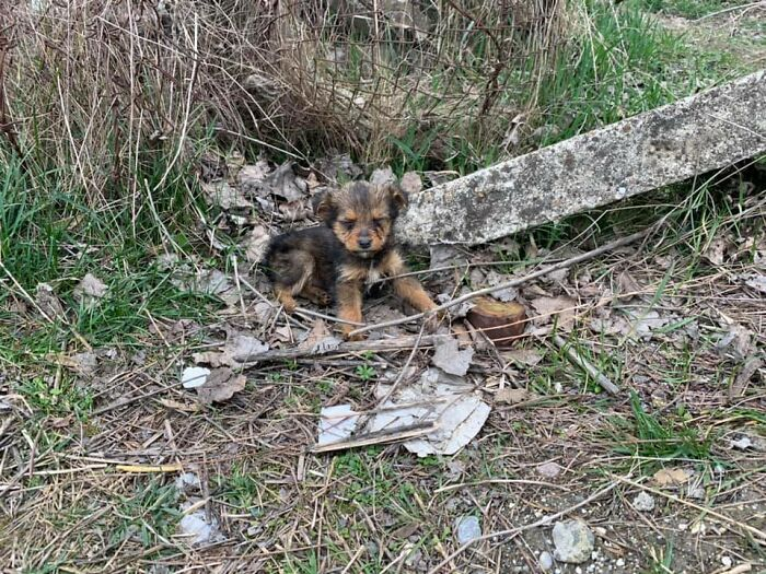 This image has an empty alt attribute; its file name is Puppy-abandoned-like-garbage-has-only-an-old-sneaker-to-protect-itself-611a0cc4c811e__700.jpg
