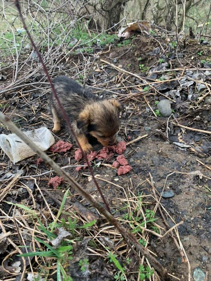 Pup Was Using A Shoe As A Shelter Until This Man Saved Him And Gave Him A Home