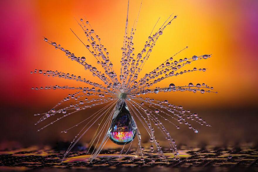 Nature – Category Winner By Petra Jung. Pusteblumen-Schirmchen