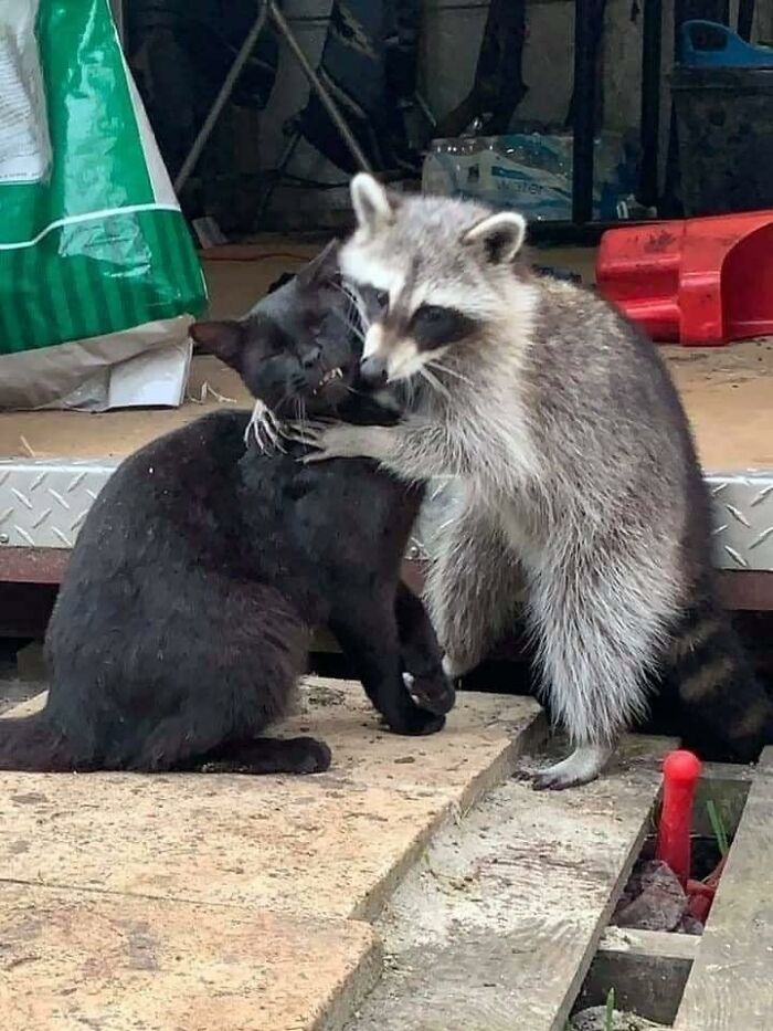 When His Breath Smells Like Trash But You Like The Affection Anyway