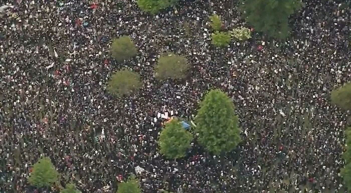 I Initially Thought These Were Small Bushes In A Gravel Flower Bed. Nope. Boston Protest 2020