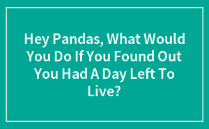 Hey Pandas, What Would You Do If You Found Out You Had A Day Left To Live?