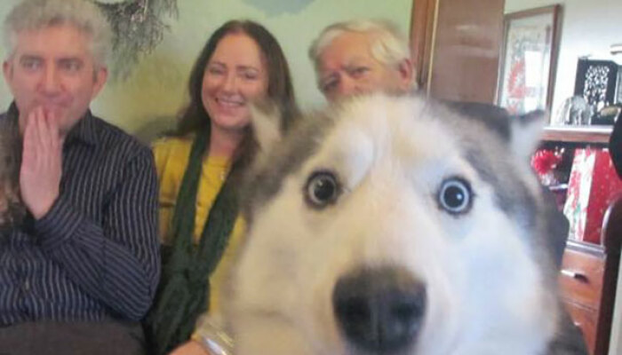 Hey Pandas, Show Me The Funniest Photobomb Your Pet Has Caused (Closed)