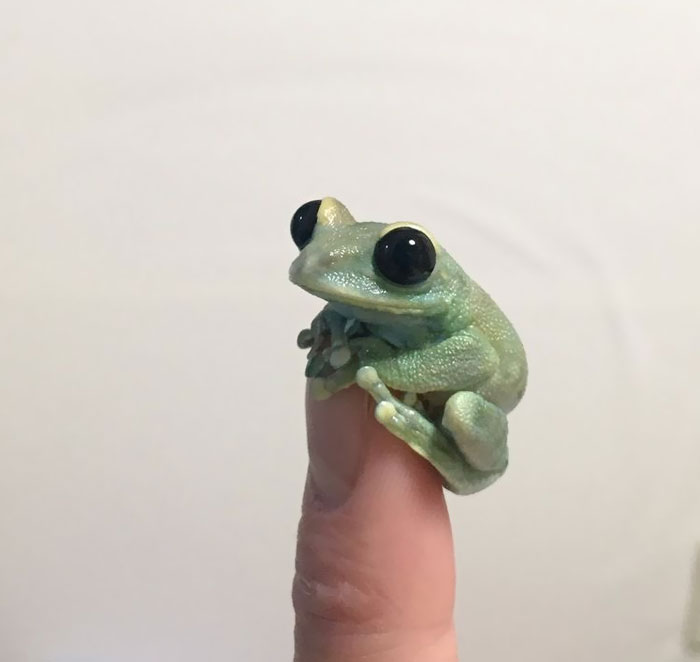 This Very Tiny Frog