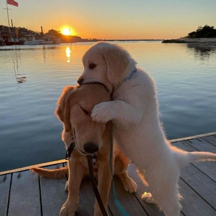 Cute-Wholesome-Blessed-Pics