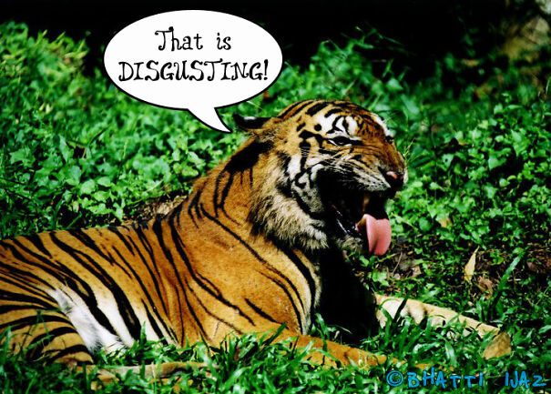 disgusted-tiger-611a64f6d52ee.jpg