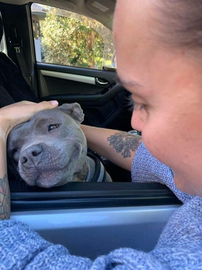 Today I Met Blue, It Was Love At First Sight, Look At Her Face?!?! Ahhhh My Heart Exploded. Her Owner Said She Could Be Petted All Day, A Job I Would Happily Take On