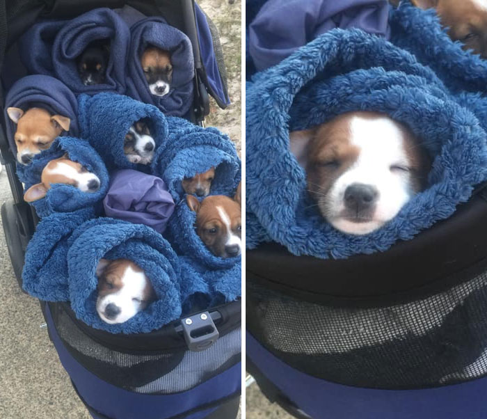 Parents Sent Me A Photo Of This Bouquet Of 5 Week Old Puppies. Spotted On The Sunshine Coast