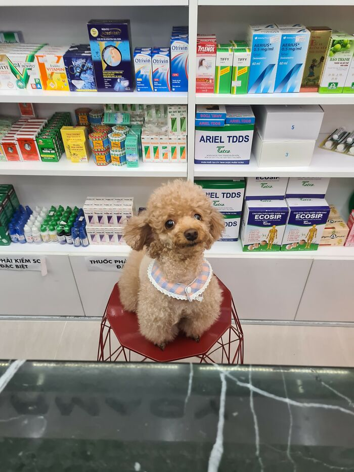 New Assistant At The Local Pharmacy