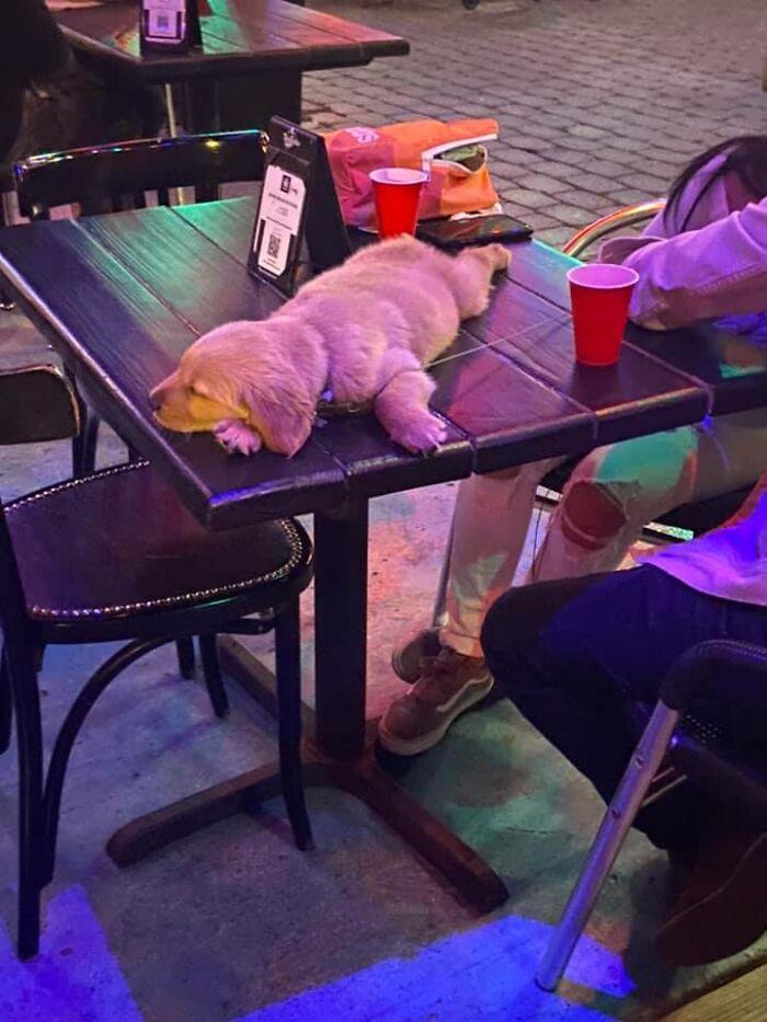 Good Noot Pupper