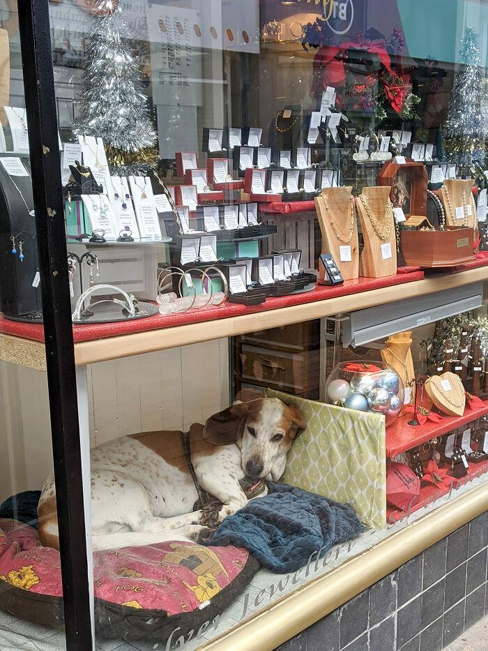 Jewellery Shop Basset