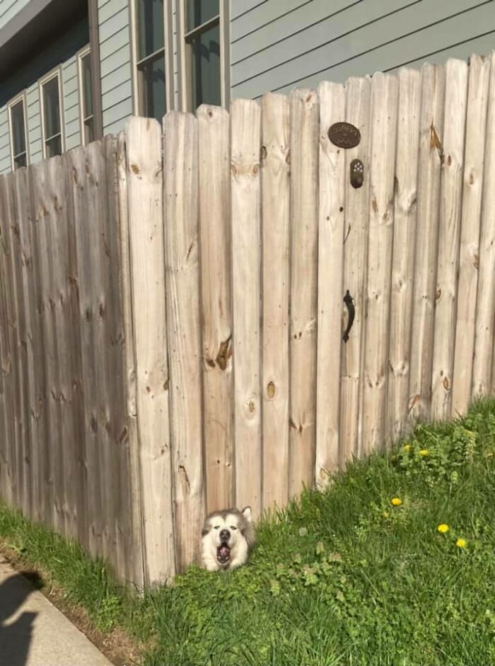 I Walk Past This Fence Hole Every Day When I Walk My Dog. This Is All I've Ever Wanted To Happen