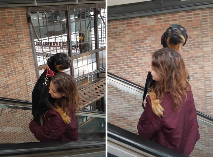 This Pup Was Too Scared To Be On An Escalator