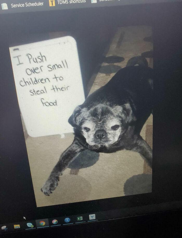 My Old Dog...
