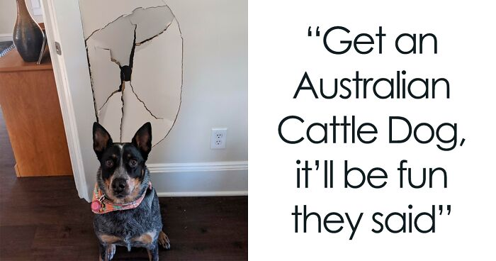 People Are Shaming Their Dogs, And Here Are 43 Of The Worst Good Boys Ever