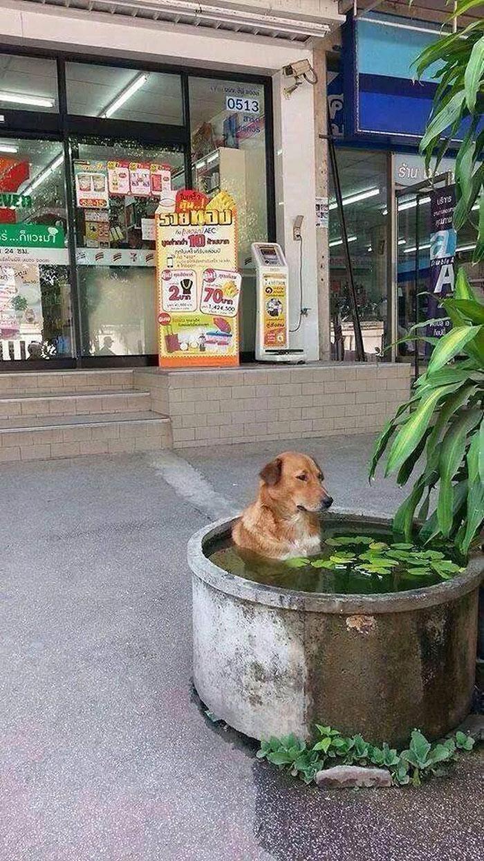 It's Hot In Thailand