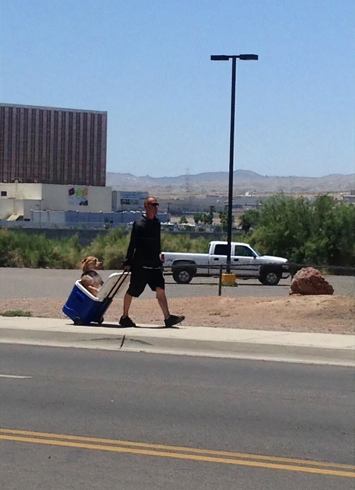 Guy In Hot Arizona Heat Did Not Want His Dog's Paws To Burn So He Pulls Him In A Cooler