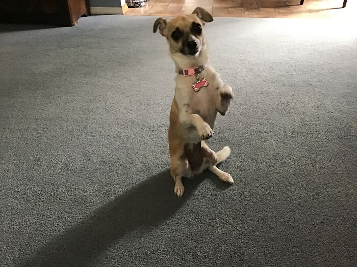 Doby Doggo