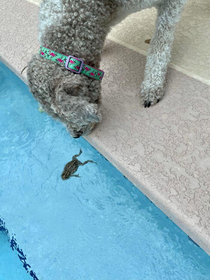 Winnie Watching A Frog!!