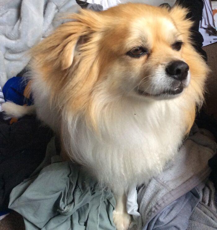 My Majestic Fluffy Boy Teddy.