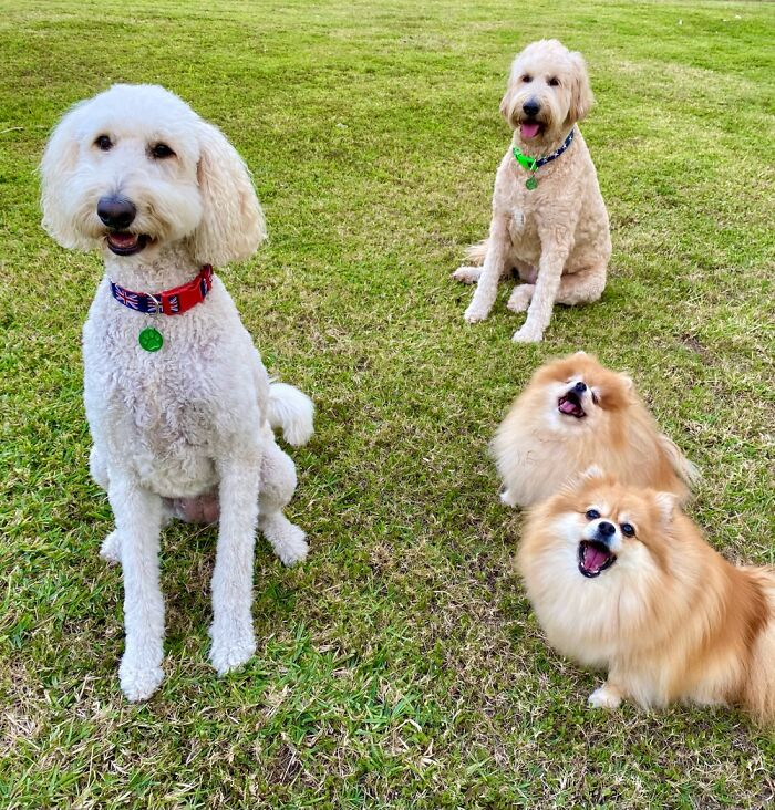 From Left, Grace, Bonnie, Ellie And Lucy.