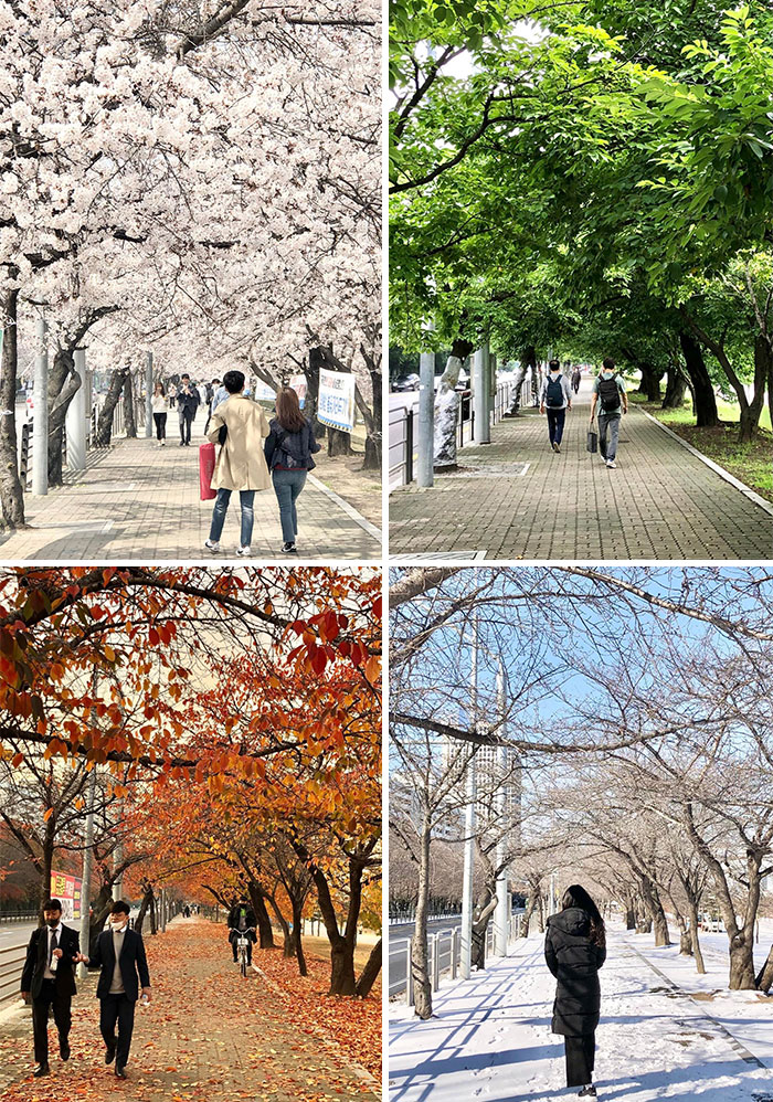 Took These In The Same Spot Over The Past Year. Korea's Four Seasons: Yeouido