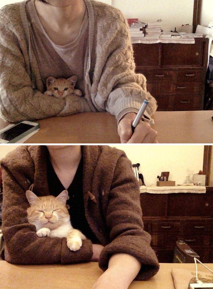 Faithful Little Desk Buddy