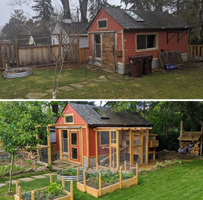 My Covid Backyard Project. An Especially Cozy Place For My Chickens. My Home Office Is In This Old Garage Looking Into The Chicken Coop