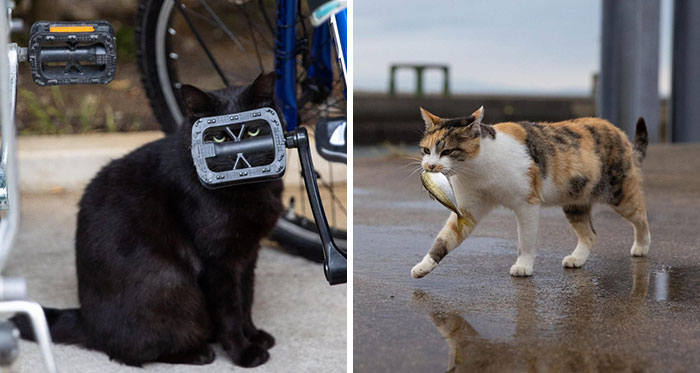 40 Extremely Funny And Cute Pictures Of Japan's Stray Cats By Masayuki Oki (New Pics)