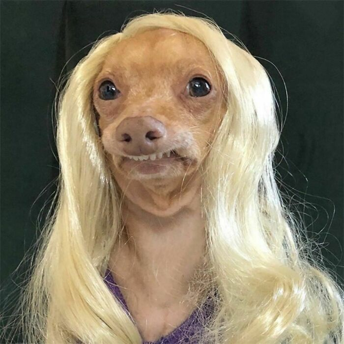 Made My Dog Wear A Wig Once :p