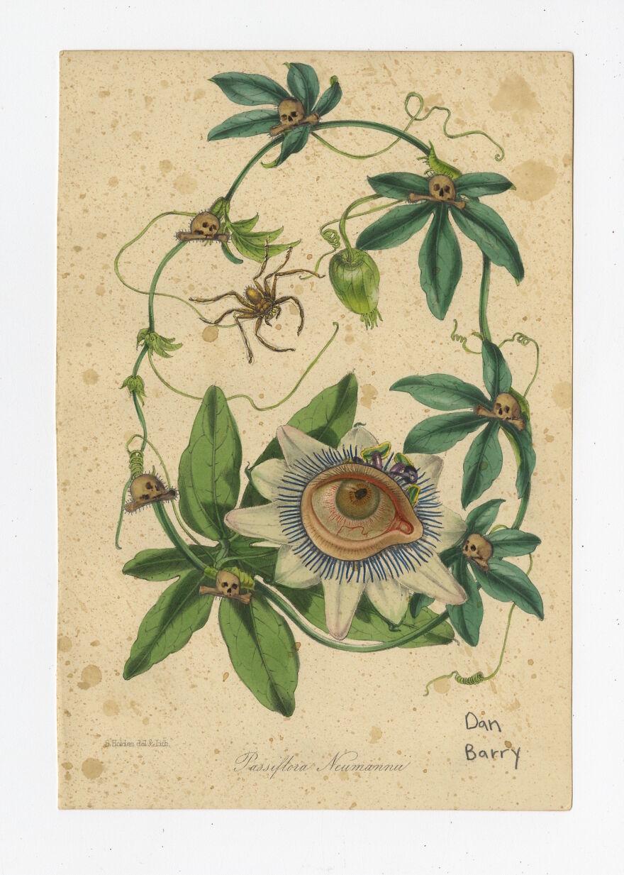 Passiflora Neumannii, 2021