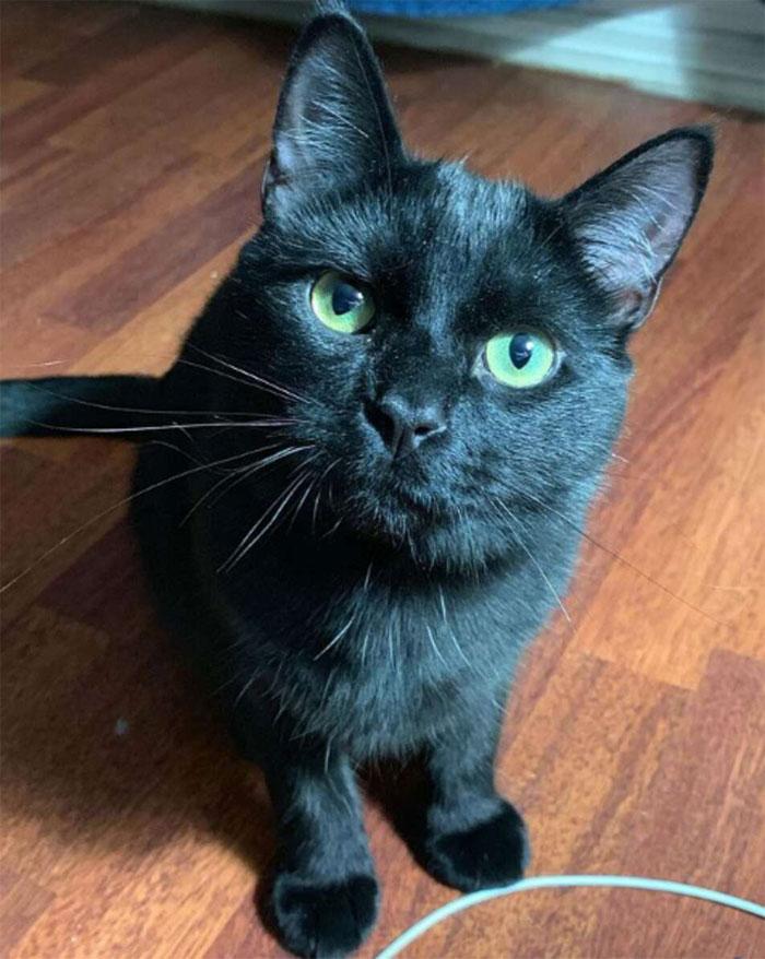 Se suponía que este gato tenía que atrapar a un ratón que vivía en la casa, pero acabaron haciéndose amigos