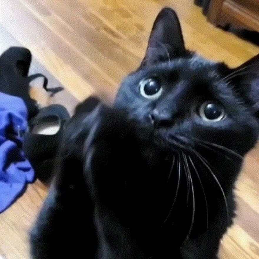 This Cat Went Viral Because He Learned To Beg In A Way That Melts People's Hearts