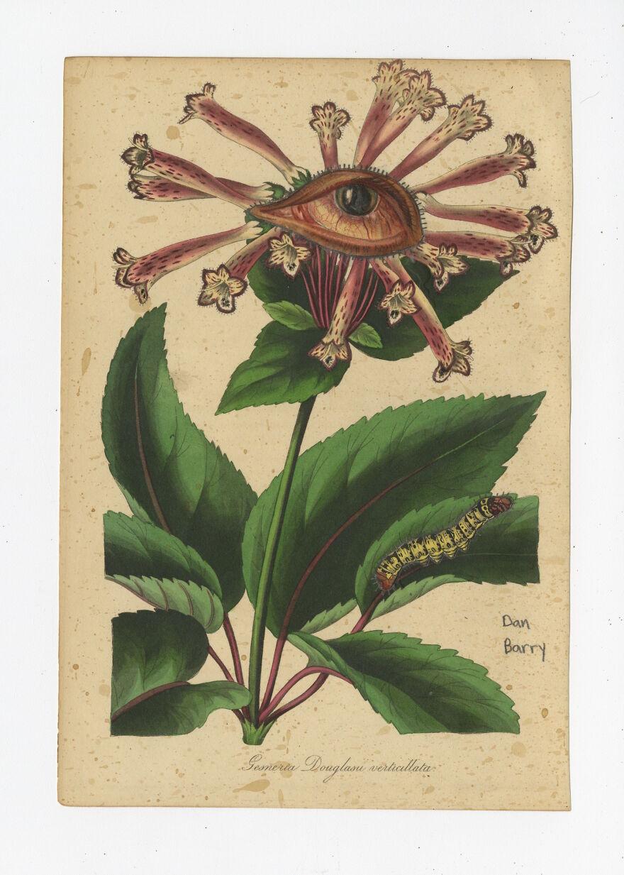 Gesneria Douglasu Verticullata, 2021