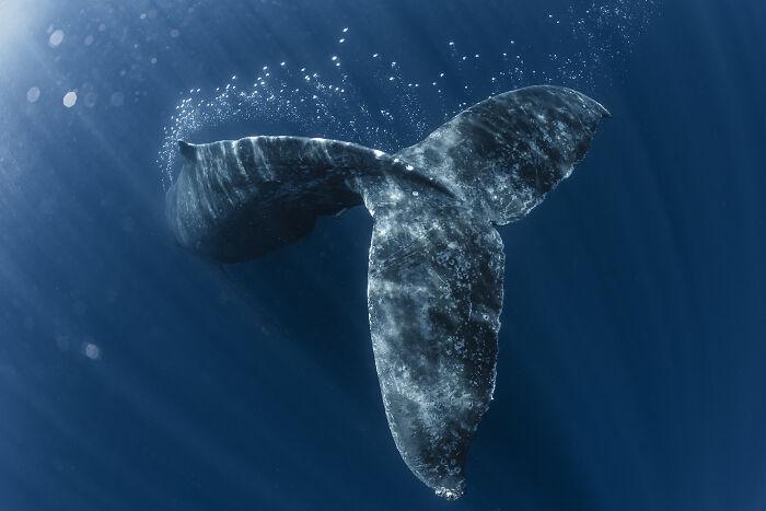 Fotógrafo de Aventuras Oceánicas: Daisuke Kurashima