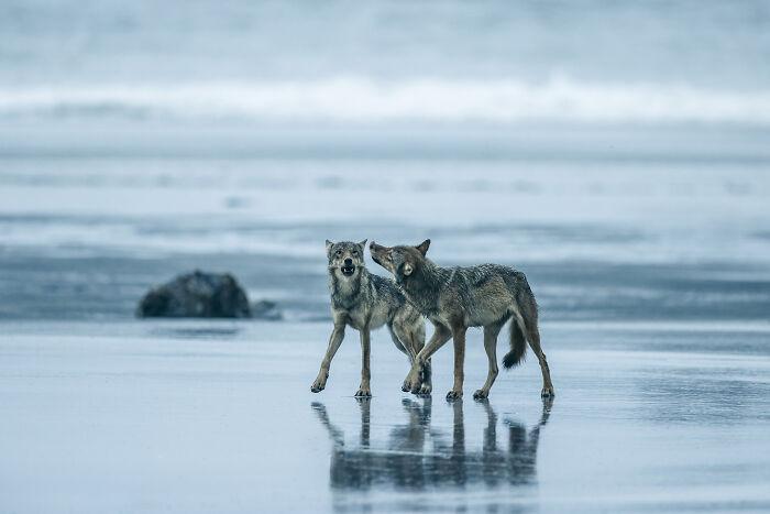 Fotógrafo de Exploración Oceánica: Steve Woods