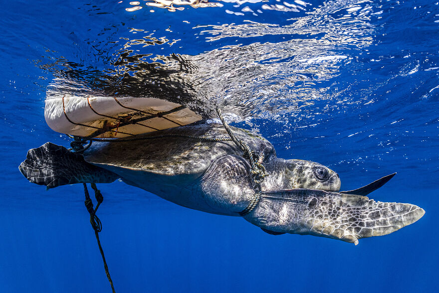 Ocean Conservation Photographer, Henley Spiers