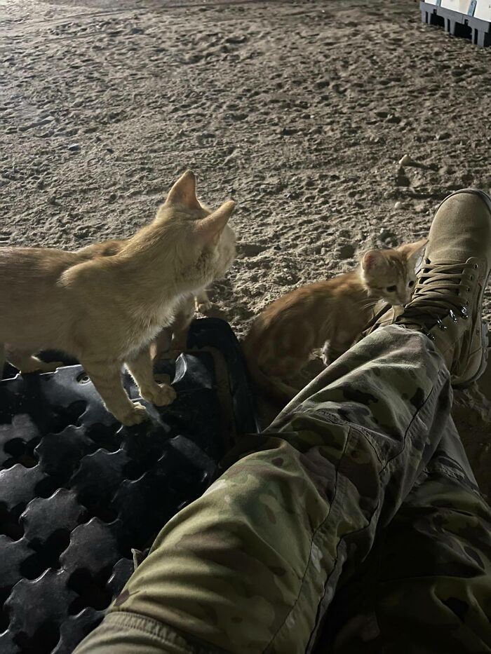Sergeant Whiskers: A Cat With Two Kittens That Comforted Soldiers While They Were On Tour