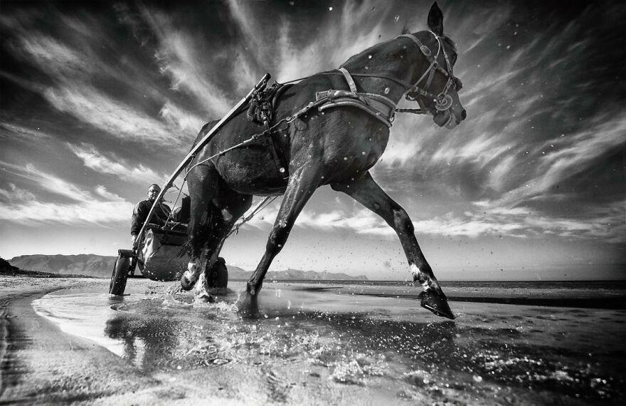 Cavallo Della Domenica By Giovanni Cassarà