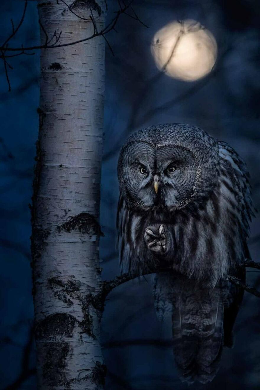Best Portrait: Night Hunter By Jonas Classon (Bronze)