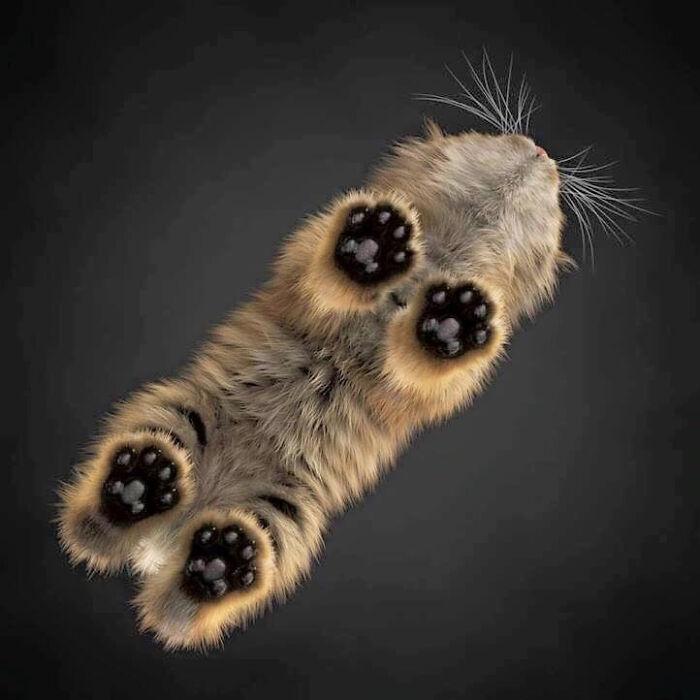 Imagen microscópica de una larva carnívora