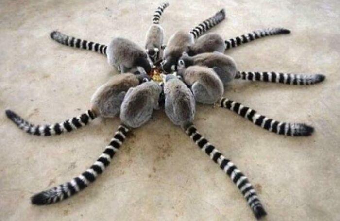 Rara araña de Madagascar