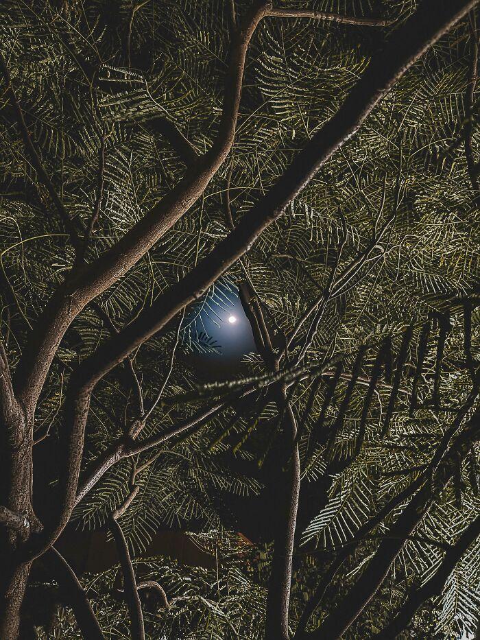 Se me ha atascado mi pelota azul en el árbol