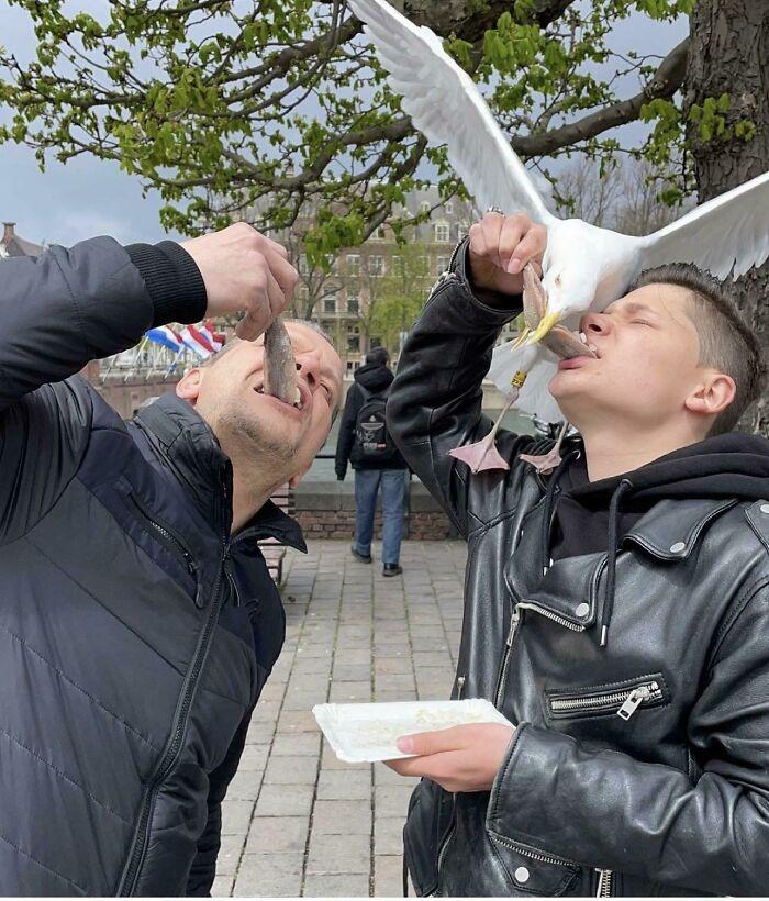 Comiendo arenque en La Haya, Holanda