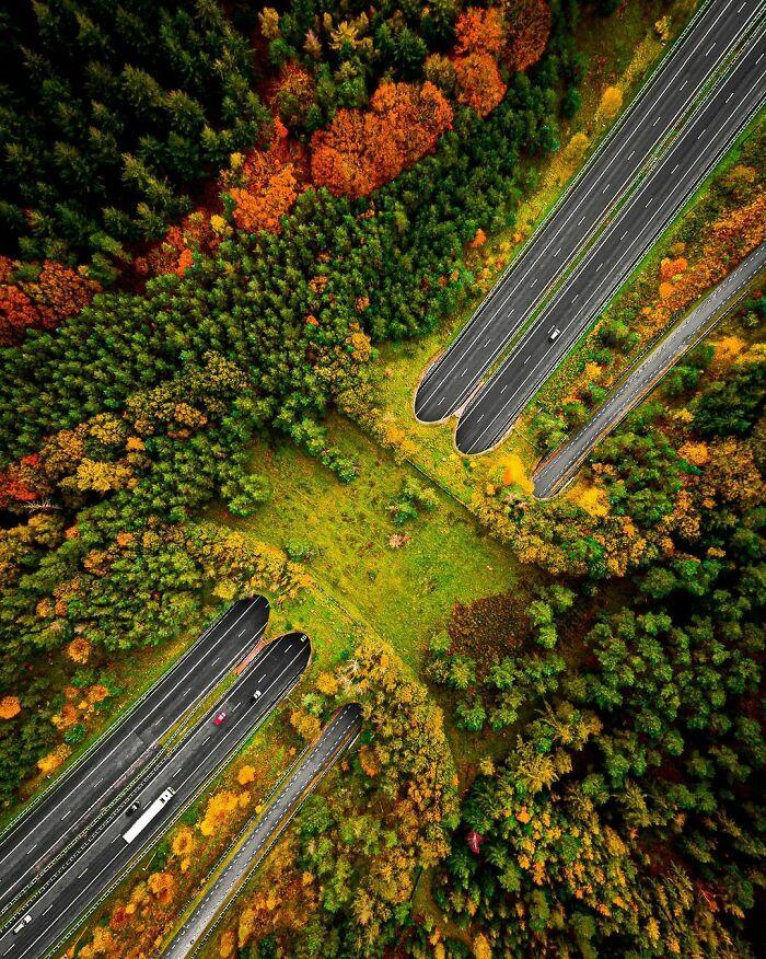 Puente para que crucen los animales en Veluwe, Holanda