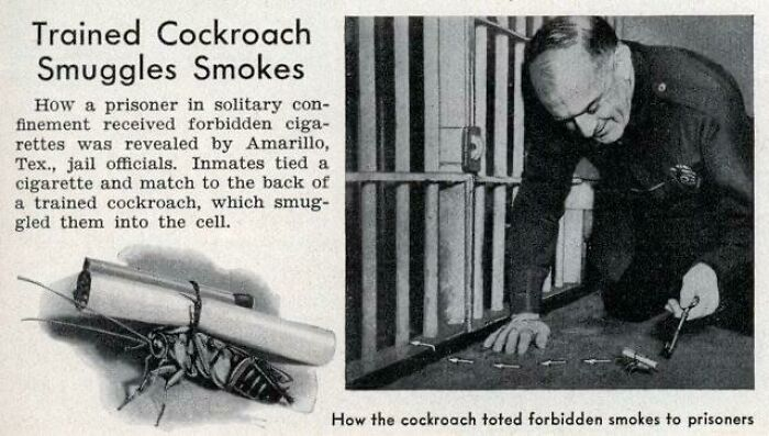 Una cucaracha entrenada introduce un cigarrillo en las celdas de la cárcel, junio de 1938