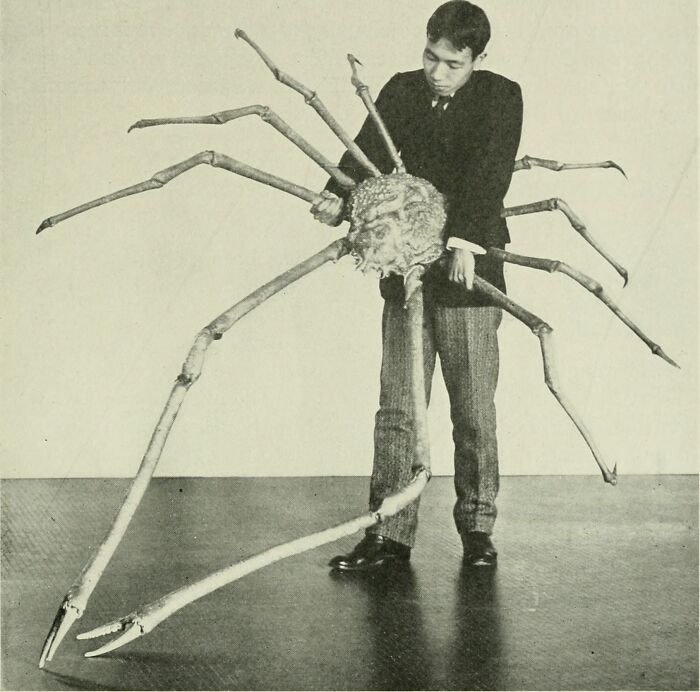 Visually, Japanese Spider Crabs Really Are The Stuff Of Nightmares