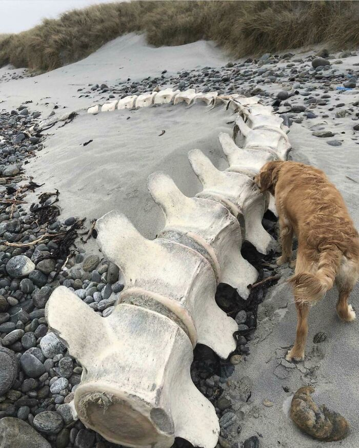 Whale Spine